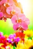 SPA, zen, σύνθεση wellness. Λουλούδια ορχιδεών Στοκ εικόνα με δικαίωμα ελεύθερης χρήσης