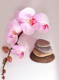 SPA zen. Stones pyramid with tender pink orchid around Royalty Free Stock Image