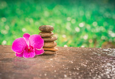 Spa Zen Orchids Thailand Royalty Free Stock Photos