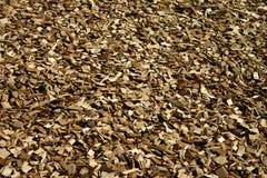 Spaanders van hout Royalty-vrije Stock Fotografie