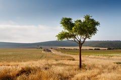 Spaans centraal landschap Royalty-vrije Stock Afbeelding
