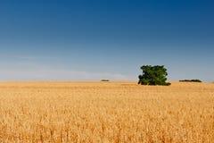 Spaans centraal landschap Royalty-vrije Stock Afbeeldingen