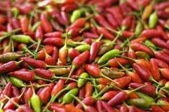 Spaanse peper Stock Afbeelding