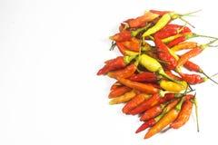Spaanse peper Stock Foto
