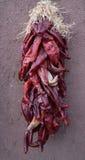 Spaanse peper in het Zuidwesten Stock Fotografie