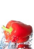 Spaanse peper onder water Stock Fotografie