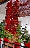 Spaanse peper of Spaanse peper Stock Fotografie