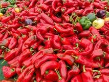 Spaanse pepers bij Oogst Stock Afbeelding