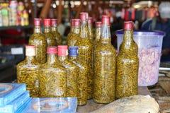 Spaanse pepers in een fles Royalty-vrije Stock Afbeelding