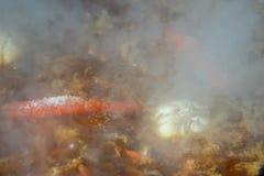 Spaanse pepers en knoflook in een ketel worden gekookt die Stock Foto's