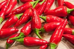 Spaanse peperspeper Stock Foto