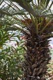 Spaanse tuin met een palm Royalty-vrije Stock Foto