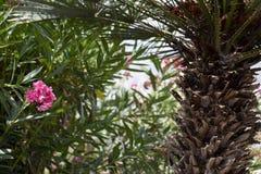 Spaanse tuin met palm en oleander Royalty-vrije Stock Foto