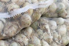 Spaanse uien in netwerkzakken stock foto