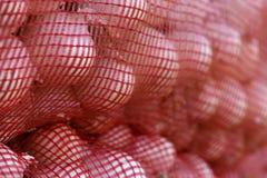 Spaanse uien voor de Britse uitvoer stock fotografie