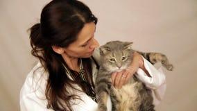 Spaanse veterinaire holdingskat stock videobeelden