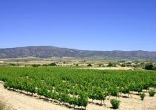 Spaanse wijngaard royalty-vrije stock foto's