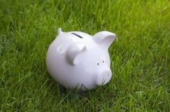 Spaarvarken in groen gras Stock Foto's