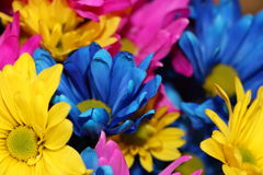 Spaßblumen Stockfoto