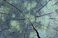 Spaccato di legno Fotografia Stock