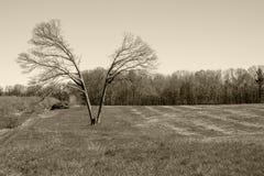 Spaccatura nel mezzo albero di concetto nel campo Immagini Stock