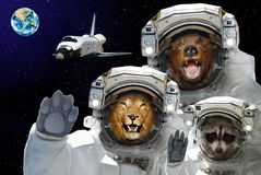 Space is available to all. Bear, raccoon and lion in space against the background of the space shuttle and the planet Earth.