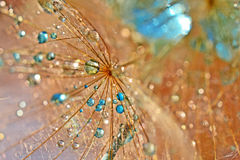 Space battle. Dandelion seed sprinkled with colors Royalty Free Stock Photos