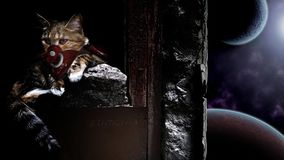 Space Cat wallpaper royalty free stock image