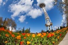 Space needle tower with orange tulips, Seattle Stock Photos