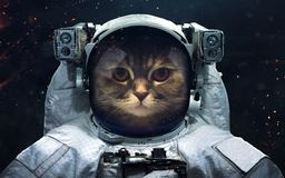 Space science fiction image. This image elements furnished by NASA. Science fiction space wallpaper with cat astronaut, incredibly beautiful planets, galaxies royalty free stock photo