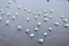 Space of seagulls. Seagulls standing at the mangrove forest stock photos