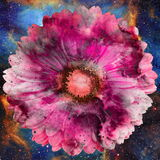 Space and stars with flower, color galaxi  background, computer collage. Space and stars with flower, color galaxi  background, computer collage Royalty Free Stock Photo