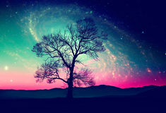 Space tree background Stock Images