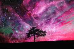 Space tree Royalty Free Stock Images