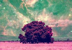 Space trees colection Stock Photography