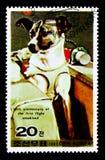 Spacedog Laik, Przewieziony seria około 1987, Obraz Royalty Free