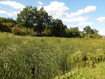 spacer na lato parka widoku jezioro całkowicie przerastający z trawą obraz stock