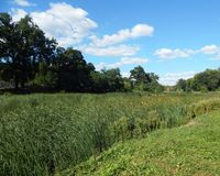 spacer na lato parka widoku jezioro całkowicie przerastający z trawą fotografia stock