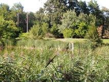 spacer na lato parka widoku jezioro całkowicie przerastający z trawą obraz royalty free