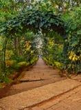 Spacer przez zieleni obrazy royalty free