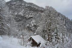Spacer synklina śnieżne góry Hallstatt, Austria gałąź jodły śniegu drzewnego widok zima fotografia stock