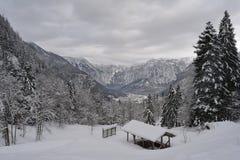 Spacer synklina śnieżne góry Hallstatt, Austria gałąź jodły śniegu drzewnego widok zima fotografia royalty free