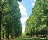 Spacer w dużych zielonych drzewach obraz stock