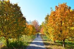 Spacer w jesień parku Zdjęcie Royalty Free