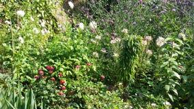 Spacer w ogródach Zdjęcie Royalty Free