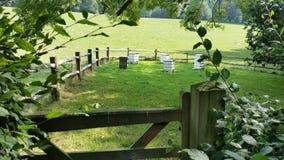 Spacer w ogródach z rojami Zdjęcia Stock