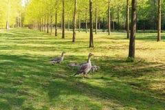 Spacer w parku gąskami rodzinnymi Obraz Stock