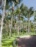 Spacer z drzewkami palmowymi Fotografia Royalty Free
