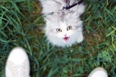 Spacer z zwierzęciem domowym Fotografia Stock