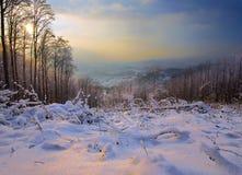 spacer zima Zdjęcia Stock